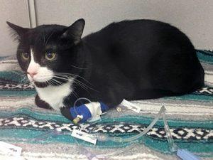 Chú mèo sống sót kỳ diệu sau khi bị quay trong máy giặt