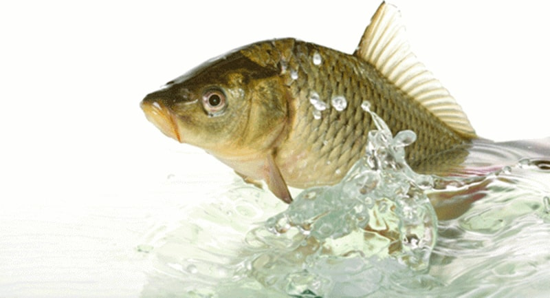giữ cá sống